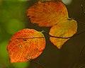 Colors (6299218691).jpg