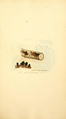 Coloured Figures of English Fungi or Mushrooms - t. 337.png