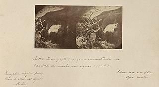 Inscrição indigena encontrada na barróca do riachão das Aguas Montas