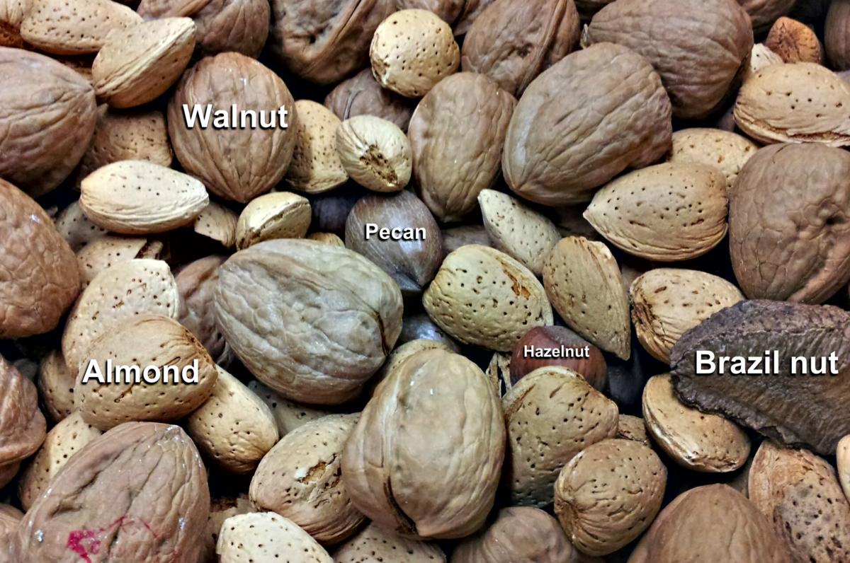 Are brazil nut shells radioactive dating 5