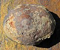 Concretion (Vinton Member, Logan Formation, Lower Mississippian; Hanover Pit, Licking County, Ohio, USA) 1 (33652815138).jpg