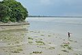 Confluence - River Saraswati and River Hooghly - Sankrail - Howrah - 2013-08-11 1419.JPG