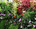 Conservatory potted plant display Capel Manor Gardens Enfield London England.jpg