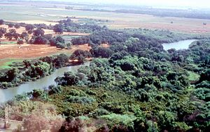 Cosumnes River - View of the lower Cosumnes River