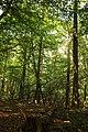 Cotthembos, Vallei van de Cotthembeek 13.jpg