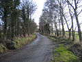 Country lane from Hamrow to Horningtoft, Norfolk - geograph.org.uk - 123723.jpg