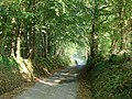 Country lane near Llanilar - geograph.org.uk - 284183.jpg