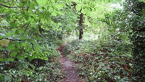 Crane Park Island - Narrow path in Crane Park Island