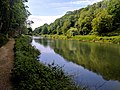 Creswell Gorge, Creswell Craggs, Notts (139).jpg