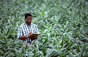 Agronomy - An agronomist measures and records corn growth and other processes.