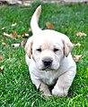 Cute puppy (1).jpg