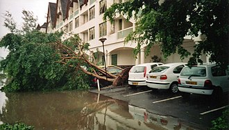 2001–02 South-West Indian Ocean cyclone season - A downed tree and street flooding from Cyclone Dina on Réunion