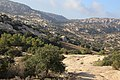 Dana Nature - panoramio (9).jpg