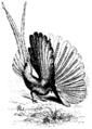 DarwinAbst52.png