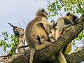 Daulatabad, Aurangabad - panoramio (38).jpg