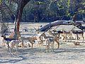 Deer goup.jpg