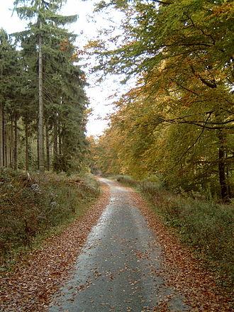 Deister - Image: Deister Kammweg