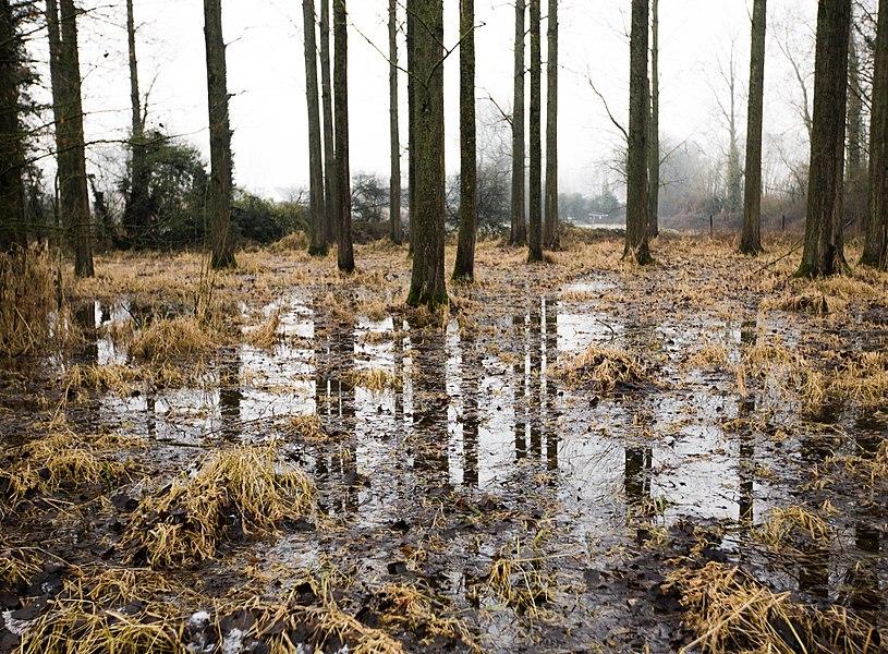 Ondergelopen meersen rond de Molenbeek in natuurgebied Den Dotter (Heldergem).