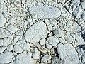 Depuneri de sare în Sărata.JPG