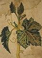 Desenho de Planta - Álbum M A B A D - Prancha N.3 , Acervo do Museu Paulista da USP (cropped).jpg