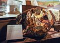 Deutsches Bergbau-Museum – DSC07708.jpg