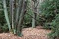Diabelskie drzewo (6) - panoramio.jpg