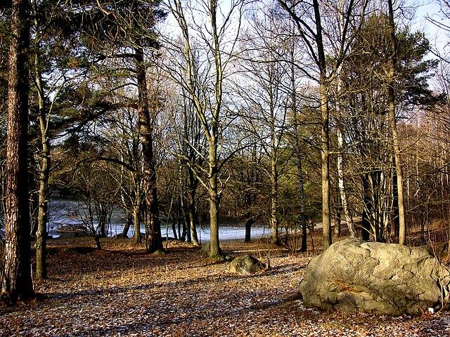 Lill-Jansskogen