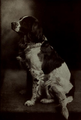 Dog by Belle Johnson (1909).png