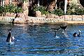 Dolphin Cove 46.jpg