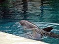 Dolphins (7980857328).jpg