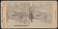 Donkeys in Central Park, New York, from Robert N. Dennis collection of stereoscopic views.png