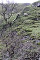 Dovedale sheep - geograph.org.uk - 701751.jpg