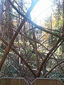 Dried up pokeweed stems.jpeg