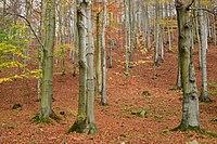 Drmaly (natural monument) 2019-10-27 Bučina.jpg