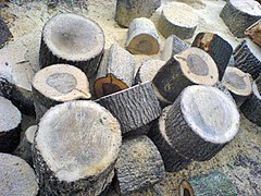 Sections of tree trunk