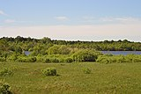 Dubechne Starovyzhivskyi Volynska-Kostianove protected tract-nature reserve-east view-1.jpg