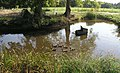 Duckpond on Nye's Hill Farm - geograph.org.uk - 252620.jpg