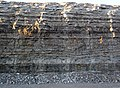 Dundee Limestone over Lucas Dolomite (Middle Devonian; Auglaize Quarry, near Junction, Ohio, USA) 4 (48889181752).jpg
