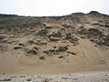 Dune Slumping (2895030680).jpg