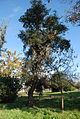ENVT 2013 arboretum2.JPG