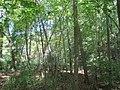East Bradford Township, PA, USA - panoramio (11).jpg