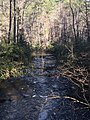 East Fork of the Chattooga River.jpg