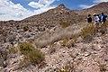 East bajada of Bennett Mountain - Flickr - aspidoscelis (1).jpg