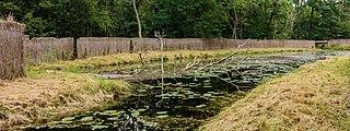 Eendenkooi De Grote Otterskooi, gelegen in provincie Overijssel. Kooiplas 08.jpg