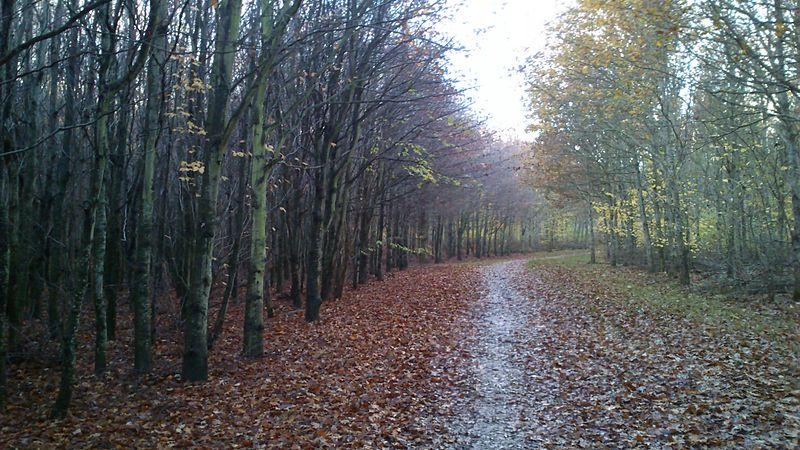 File:Efterår i Mollerup Skov.jpg