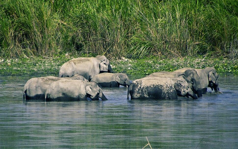 Elephant bathing session