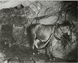 Empire Mine State Historic Park - Image: Empire Mine Mule