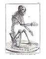 Encyclopédie méthodique - Mammalogie, Pl1.png