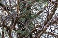 Endless Stations 8 - Cypress-Pine.jpg