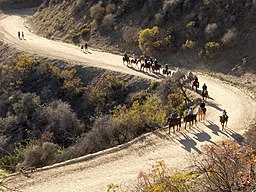 Equestrian trail use in Griffith Park 2015-12-27